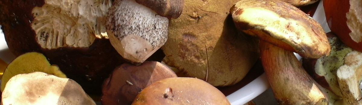 Immagine di funghi freschi di bosco