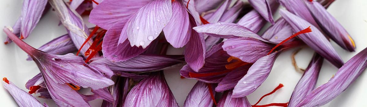 Immagine di fiori di zafferano