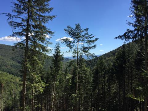 Immagine del Parco Nazionale delle Foreste Casentinesi