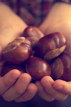 Immagine di mani ricolme di castagne